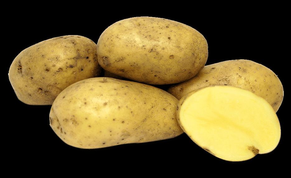 patata agria
